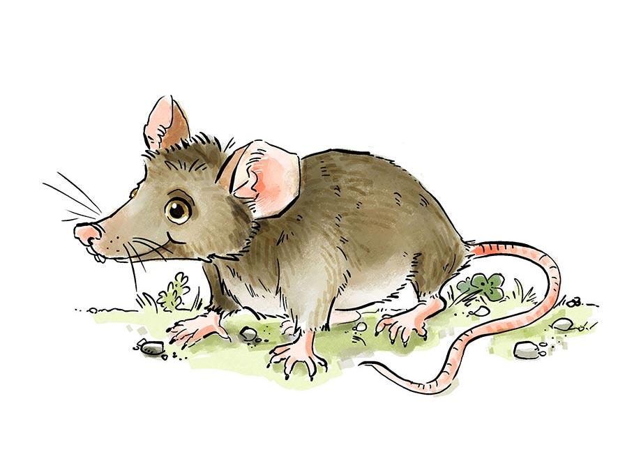 Zeichnung einer Maus